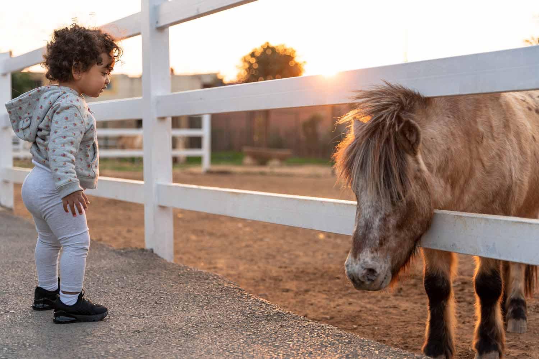 balade poney animalia parc